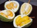 durian-inside
