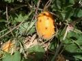 wpid-horned-melon-vine-in-kilome1