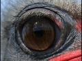 ostrich_eye_by_frank_1956-d642kjy