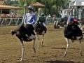ostrich_race