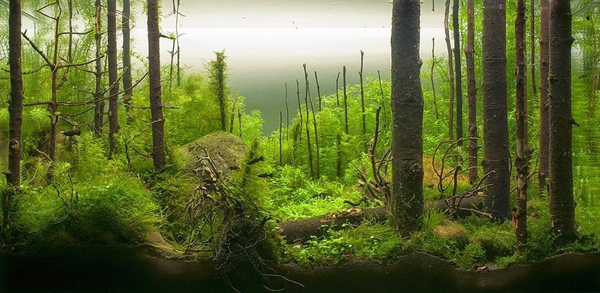 water-forest1