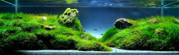 water-forest10