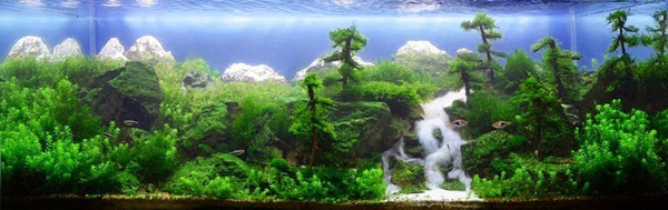 water-forest7