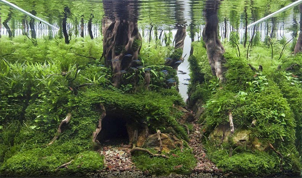 water-forest8